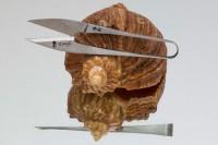 Ножницы Watanabe 110mm - Интернет магазин Японских кухонных туристических ножей Vip Horeca